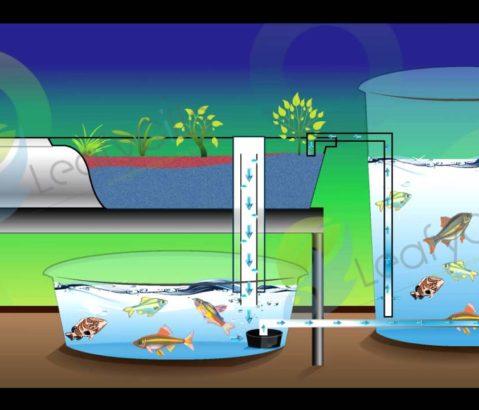 植物&お魚を一緒に-アクアポニックス-